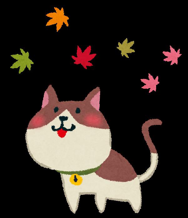 11月pyoko11_kouyou